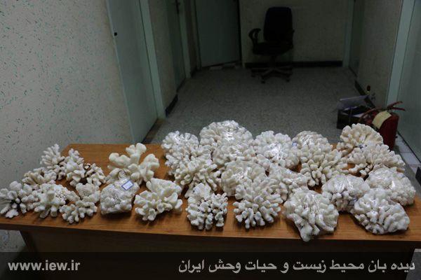 920722 chabahar 2 کشف محموله قاچاق مرجان در چابهار و همچنین خسارت ۹۲۰میلیون ریالی به محیط زیست