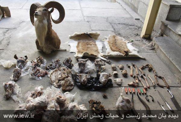 قتل عام بی سابقه حیات وحش در مشهد