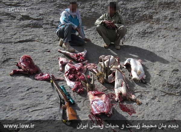 عاملین کشتار ۳ کل و بز وحشی در ارتفاعات کالمند بهادران یزد بازداشت شدند