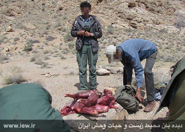 عاملین کشتار پنج راس کل وحشی در منطقه حفاظت شده کالمند دستگیر شدند