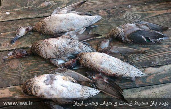 گورستان پرندگان مهاجر