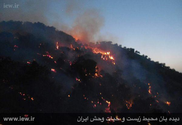 بیش از یکصد هکتار از جنگل های بلوط ایلام در آتش سوخت