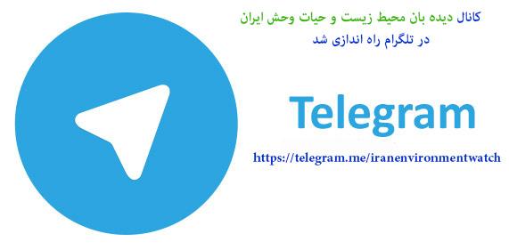 کانال تلگرام حیات وحش