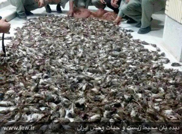 لاشه گنجشک در خوزستان ، وبلاگ احساس خوب