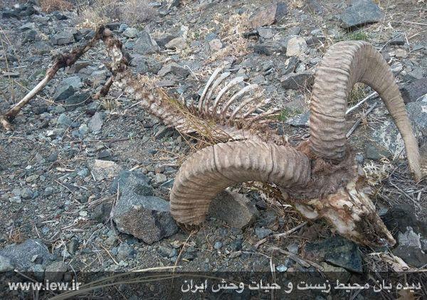 پلنگ ایرانی شهرستان زاوه..وبلاگ احساس خوب