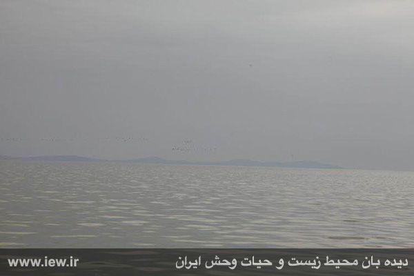 950123 daryache 6 دسترسی به جزایر دریاچه ارومیه بوسیله قایق میسر شد + تازه ترین و جدیدترین تصاویر دریاچه