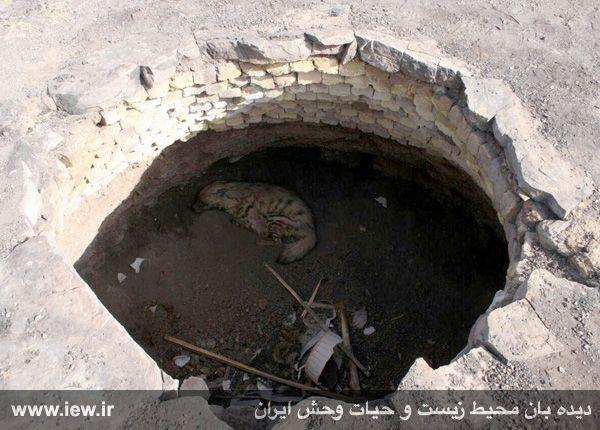 950214 kahak ghom 51 نجات کفتار راه راه از درون چاهی در قم
