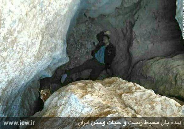 950310 khangormaz 7 با تلاش نیروهای هلال احمر، محیطبان همدانی از مردن و مرگ نجات یافت