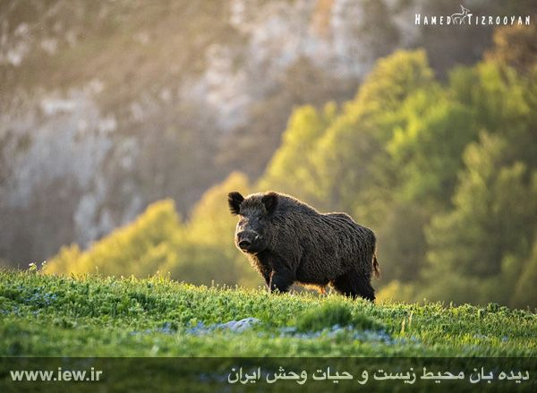 950311 chekad 31 ثبت تصاویر زیبا از تنوع زیستی کم نظیر در پناهگاه حیات وحش دودانگه و همچنین چهاردانگه