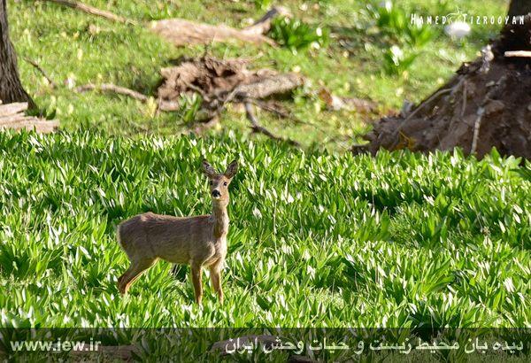 950311 chekad 4 ثبت تصاویر زیبا از تنوع زیستی کم نظیر در پناهگاه حیات وحش دودانگه و همچنین چهاردانگه