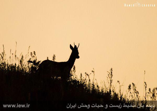 950311 chekad 51 ثبت تصاویر زیبا از تنوع زیستی کم نظیر در پناهگاه حیات وحش دودانگه و همچنین چهاردانگه