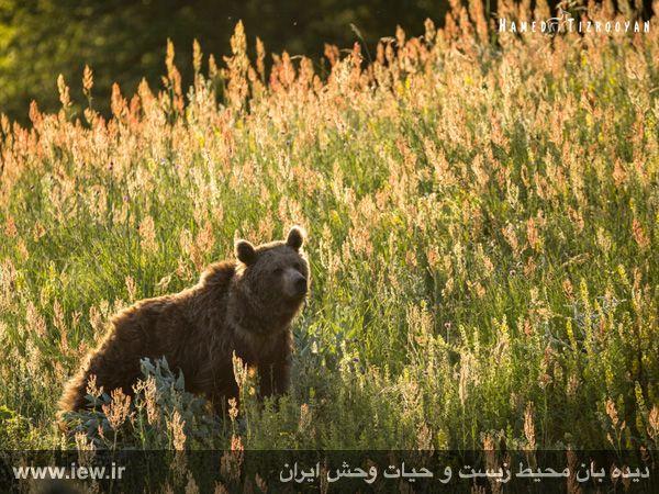 950311 chekad 6 ثبت تصاویر زیبا از تنوع زیستی کم نظیر در پناهگاه حیات وحش دودانگه و همچنین چهاردانگه