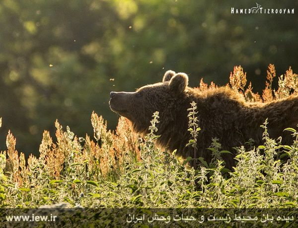 950311 chekad 7 ثبت تصاویر زیبا از تنوع زیستی کم نظیر در پناهگاه حیات وحش دودانگه و همچنین چهاردانگه