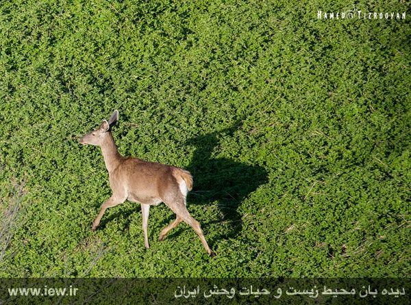 950311 chekad 9 ثبت تصاویر زیبا از تنوع زیستی کم نظیر در پناهگاه حیات وحش دودانگه و همچنین چهاردانگه