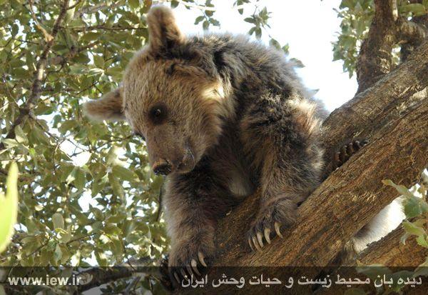 [تصویر:  960721_khers-eslamabad-2.jpg]