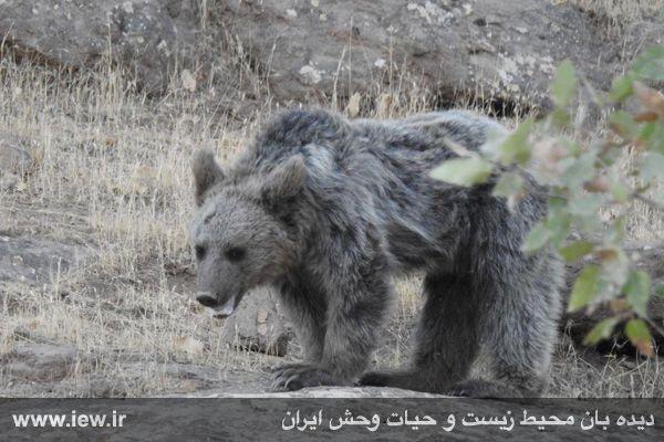 [تصویر:  960721_khers-eslamabad-51.jpg]