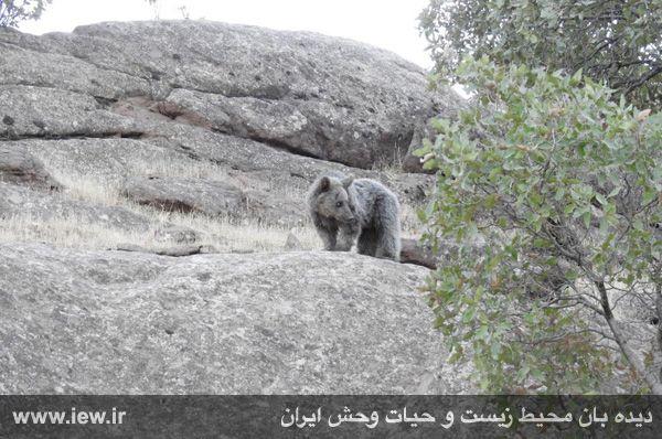 [تصویر:  960721_khers-eslamabad-7.jpg]