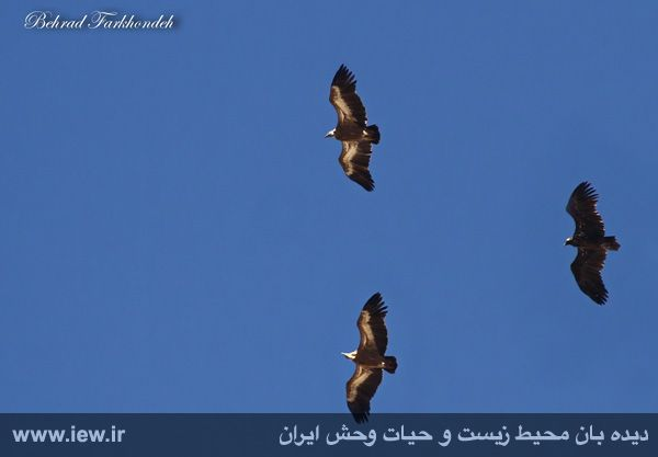 [تصویر:  960905_farkhonde-golestan-9.jpg]