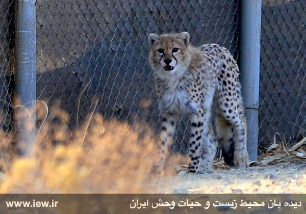 [تصویر:  961005_iran-1.jpg]
