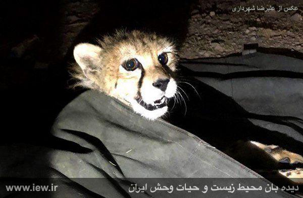 [تصویر:  961005_iran-2.jpg]