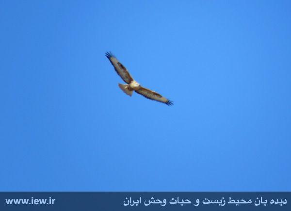 [تصویر:  961022_bahramghoor-1.jpg]