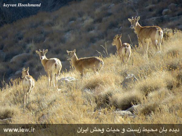[تصویر:  961022_bahramghoor-10.jpg]
