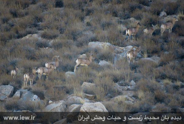 [تصویر:  961022_bahramghoor-111.jpg]