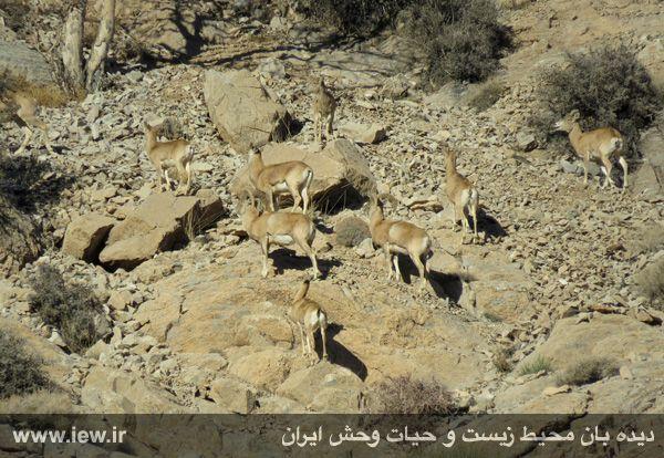 [تصویر:  961022_bahramghoor-14.jpg]