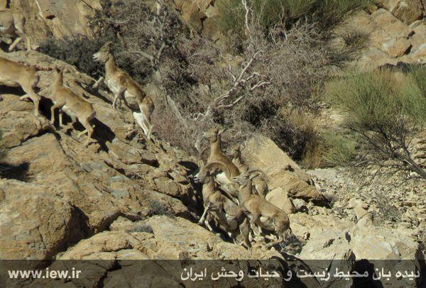[تصویر:  961022_bahramghoor-15.jpg]