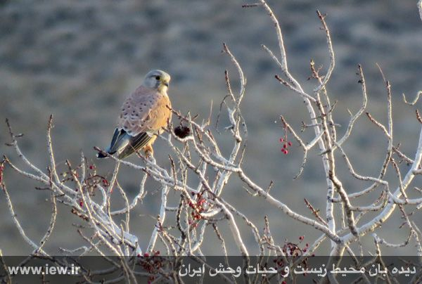 [تصویر:  961022_bahramghoor-16.jpg]
