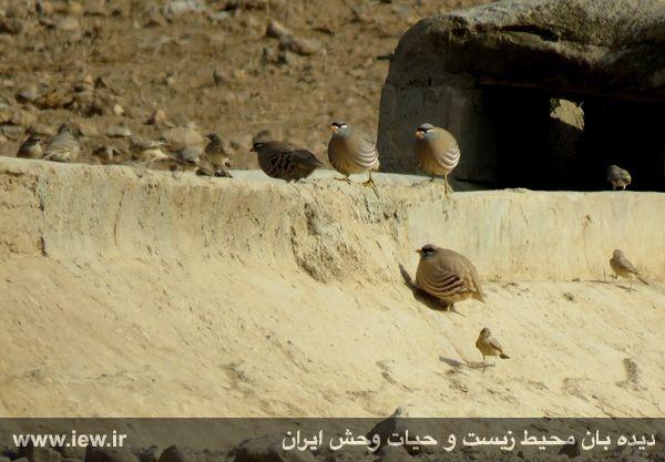 [تصویر:  961022_bahramghoor-17.jpg]