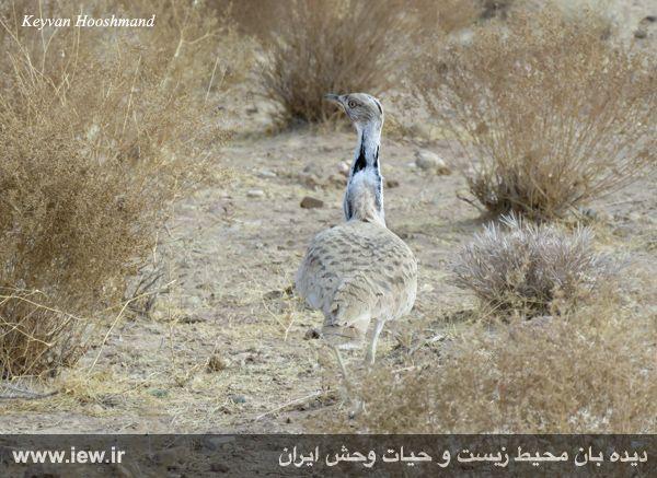[تصویر:  961022_bahramghoor-18.jpg]