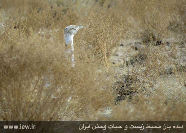 [تصویر:  961022_bahramghoor-19.jpg]