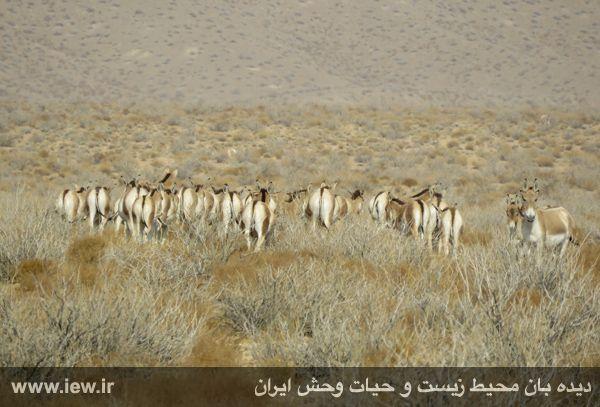 [تصویر:  961022_bahramghoor-20.jpg]