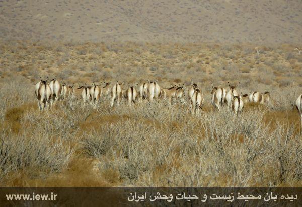 [تصویر:  961022_bahramghoor-21.jpg]