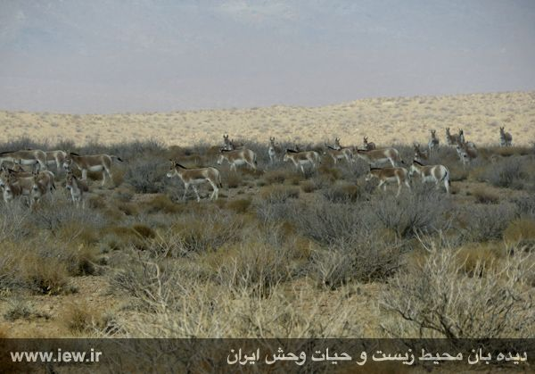 [تصویر:  961022_bahramghoor-22.jpg]