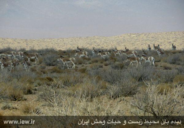[تصویر:  961022_bahramghoor-221.jpg]