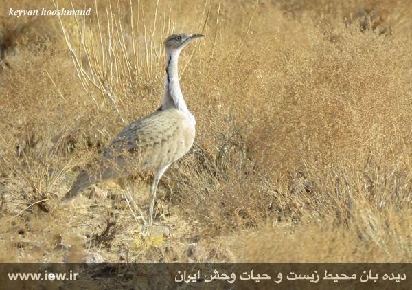 [تصویر:  961022_bahramghoor-241.jpg]