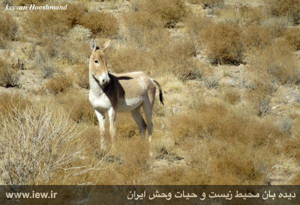 [تصویر:  961022_bahramghoor-26.jpg]