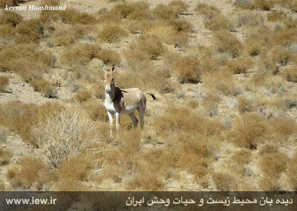 [تصویر:  961022_bahramghoor-27.jpg]