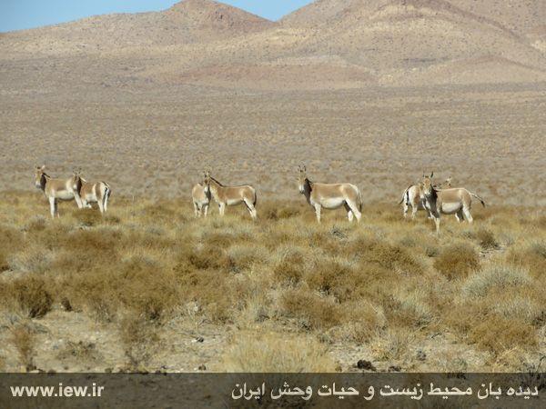 [تصویر:  961022_bahramghoor-28.jpg]