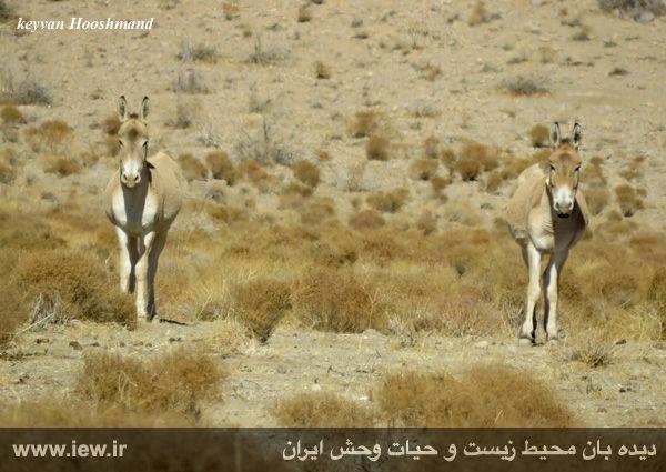 [تصویر:  961022_bahramghoor-29.jpg]