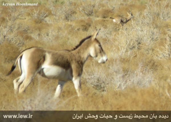 [تصویر:  961022_bahramghoor-31.jpg]