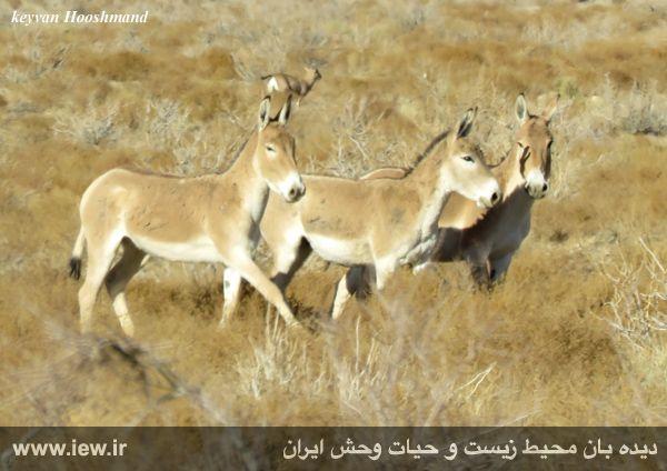 [تصویر:  961022_bahramghoor-32.jpg]