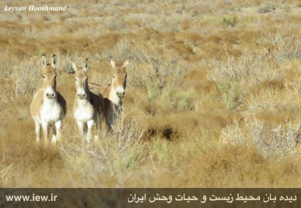 [تصویر:  961022_bahramghoor-33.jpg]