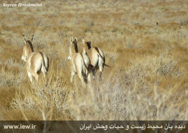 [تصویر:  961022_bahramghoor-34.jpg]