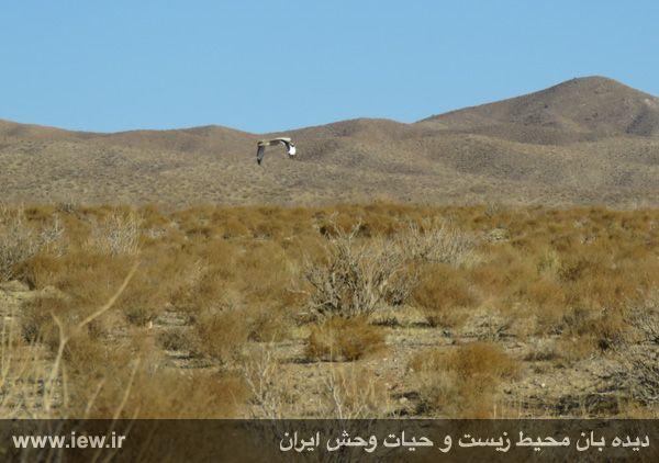 [تصویر:  961022_bahramghoor-35.jpg]