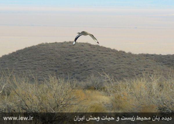[تصویر:  961022_bahramghoor-39.jpg]