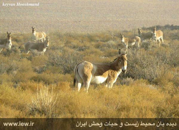 [تصویر:  961022_bahramghoor-40.jpg]