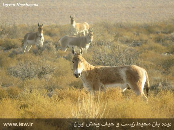 [تصویر:  961022_bahramghoor-41.jpg]